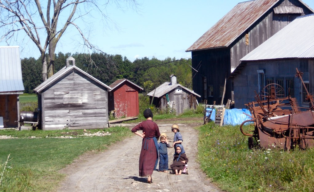 amish cropped